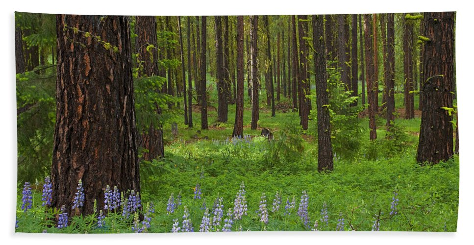 Forest Bath Towel featuring the photograph Lupine Carpet by Mike Dawson