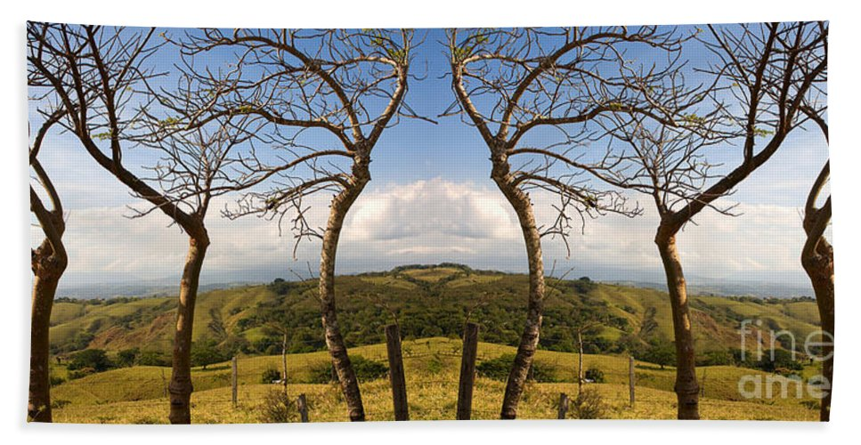 Trees Hand Towel featuring the photograph Lush Land Leafless Trees IIi by Madeline Ellis
