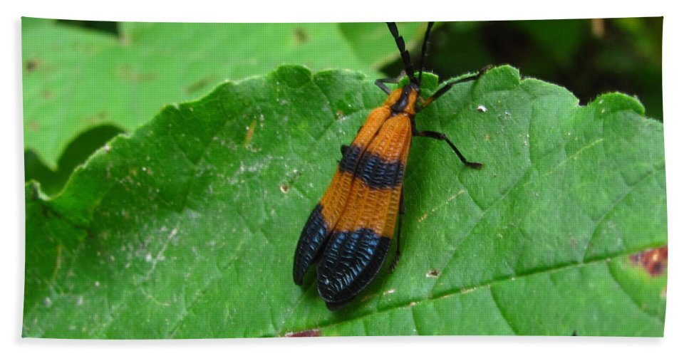 Lycomorpha Moth Images Orange And Black Moth Prints Forest Ecology Biodiversity Nature Entomology Oldgrowth Forest Preservation Hand Towel featuring the photograph Lycomorpha Moth by Joshua Bales