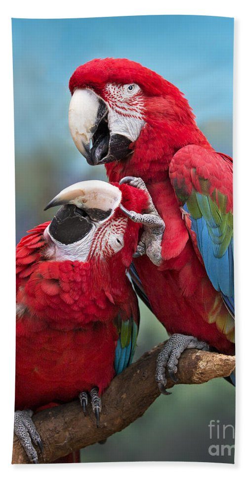 Macaw Bath Sheet featuring the photograph Macaw Love by Emma England