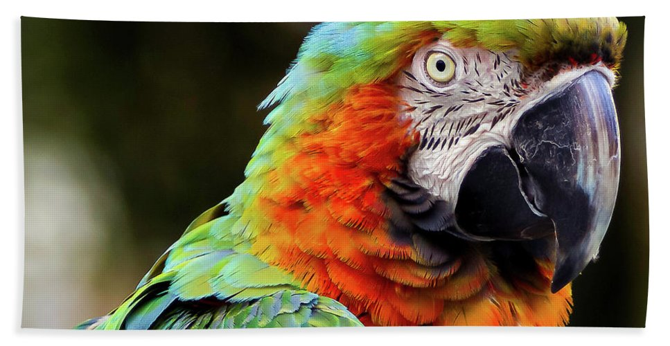 Beautiful Macaw Bath Sheet featuring the photograph Macaw by Sanjay Bhave