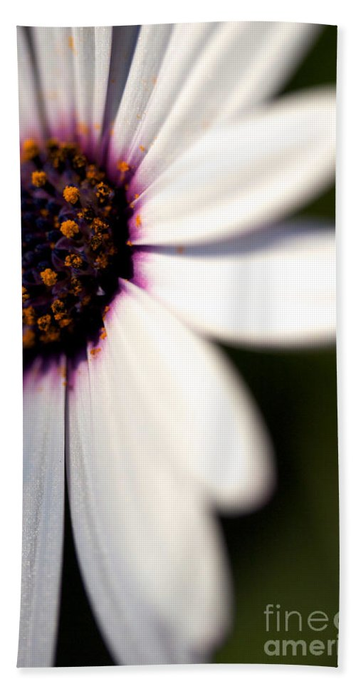 Daisy Flower Hand Towel featuring the photograph Macro Daisy One by Brooke Roby