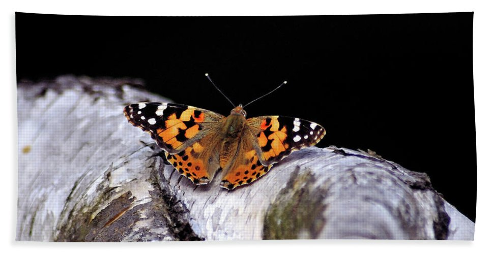 Butterfly Bath Sheet featuring the photograph Madame Butterfly by Ilaria Andreucci