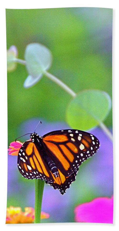 Magical Hand Towel featuring the photograph Magical Monarch by Byron Varvarigos