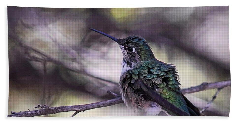 Magnificent Bath Towel featuring the photograph Magnificent Hummingbird by Saija Lehtonen