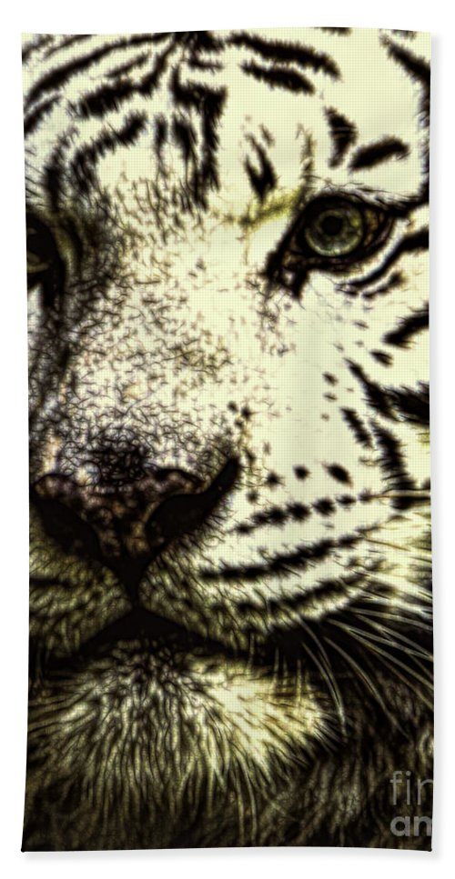 Big Cats Hand Towel featuring the photograph Magnificent by Ken Frischkorn