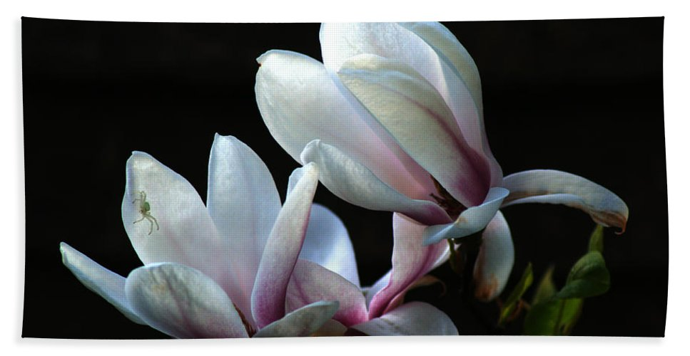 Magnolia Bath Sheet featuring the photograph Magnolia And House Guest by Chris Day