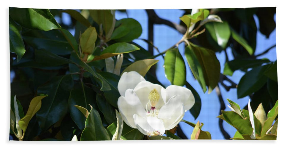 Magnolia Blooming 4 Bath Sheet featuring the photograph Magnolia Blooming 4 by Ruth Housley