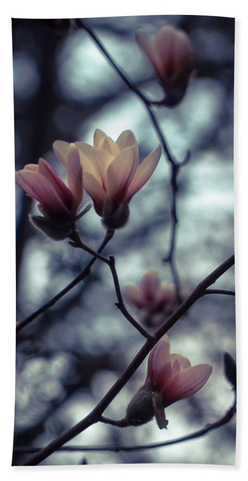 Magnolia Hand Towel featuring the photograph Magnolia Blossom by Lilia D