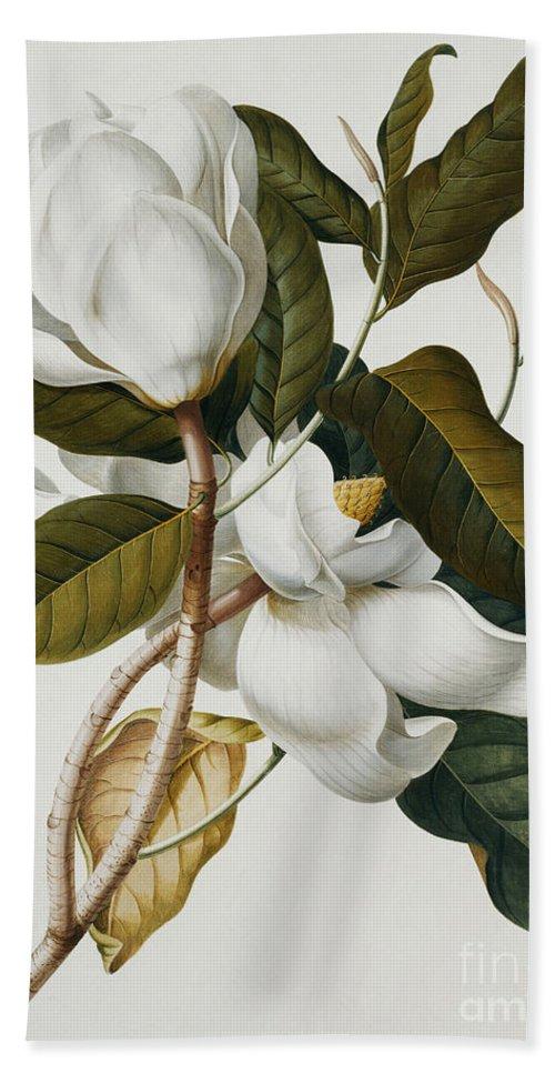 Magnolia Bath Towel featuring the painting Magnolia by Georg Dionysius Ehret