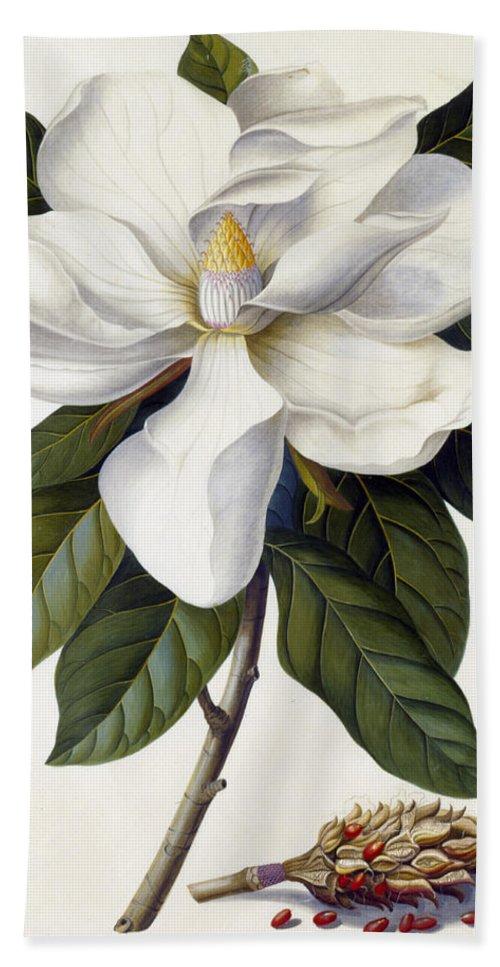 Magnolia Grandiflora Bath Towel featuring the painting Magnolia grandiflora by Georg Dionysius Ehret