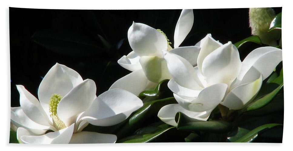 Patzer Bath Sheet featuring the photograph Magnolia by Greg Patzer