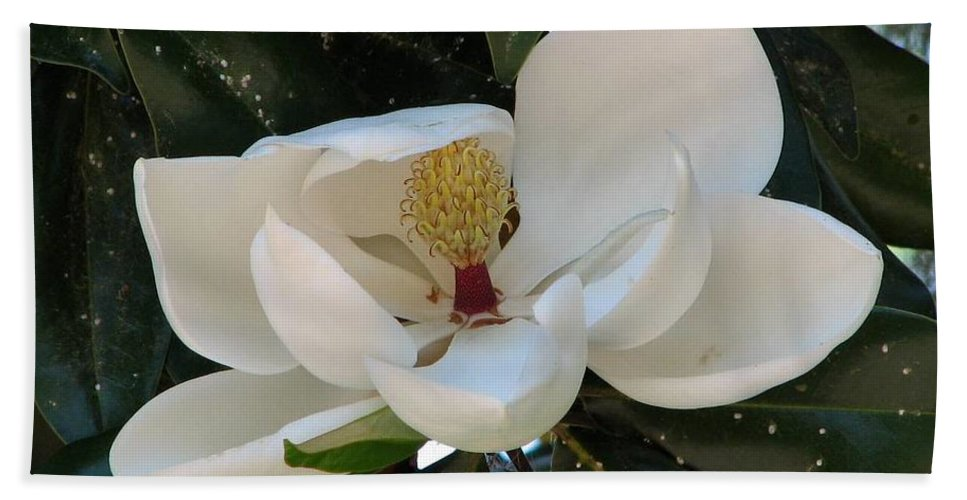 Magnolia Hand Towel featuring the photograph Magnolia by J M Farris Photography
