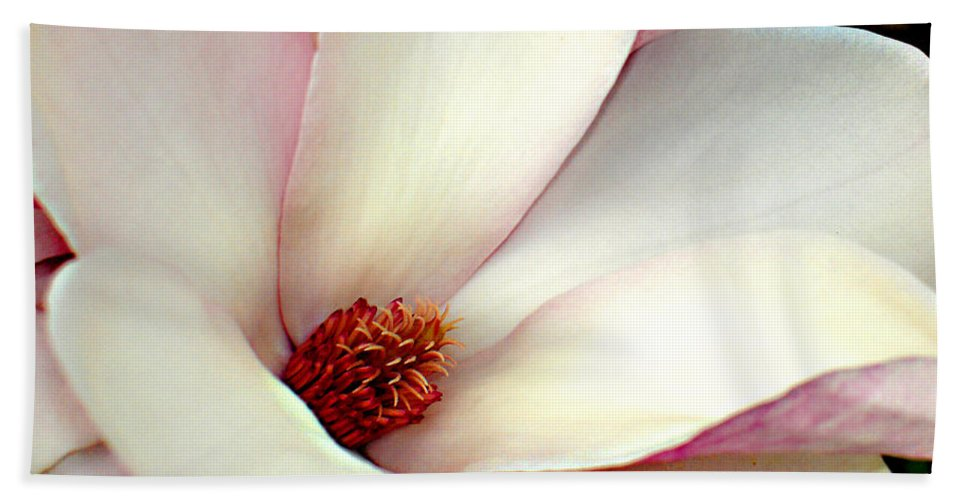 Floral Hand Towel featuring the photograph Magnolia by Steve Karol