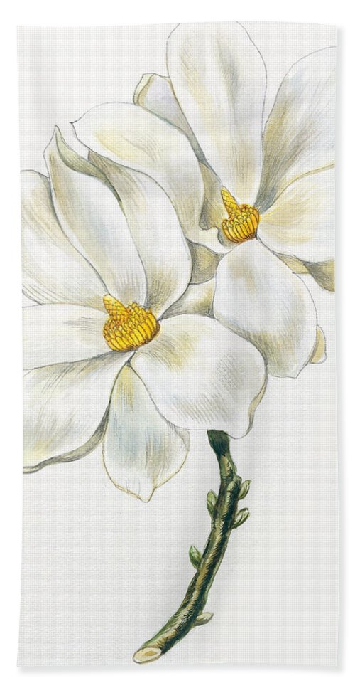 Magnolia Hand Towel featuring the painting Magnolia by Unknown