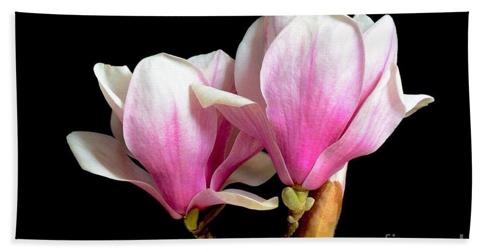 Magnolias In Spring Bloom Hand Towel featuring the photograph Magnolias In Spring Bloom by Jeannie Rhode