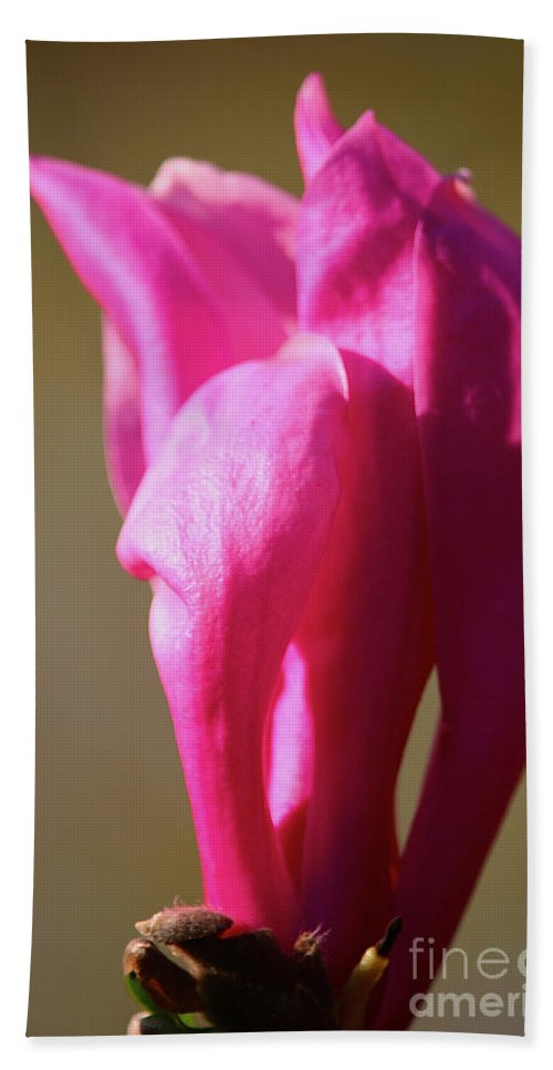 Flower Hand Towel featuring the photograph Magnolia's Torch by Susan Herber