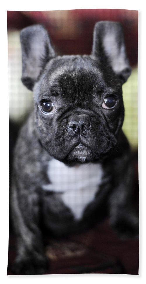 Dog Bath Sheet featuring the photograph Magoo II by Rafa Rivas