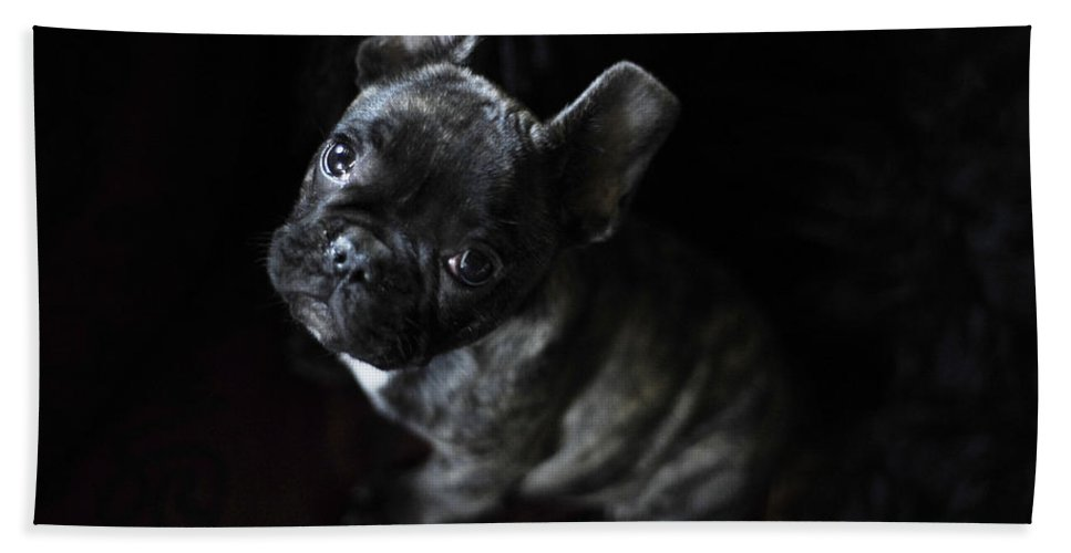 Dog Bath Sheet featuring the photograph Magoo IIi by Rafa Rivas