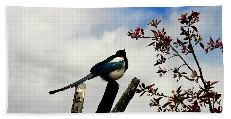 Magpie Bath Towel featuring the photograph Magpie by Anthony Jones