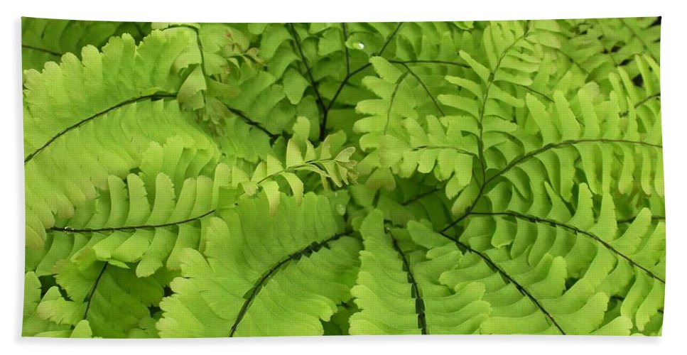 Fern Hand Towel featuring the photograph Maidenhair by Nelson Strong