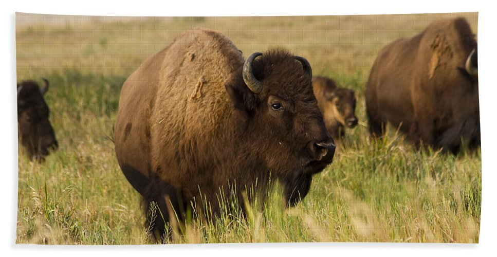 Animal Hand Towel featuring the photograph Majestic Bison by Teresa Zieba