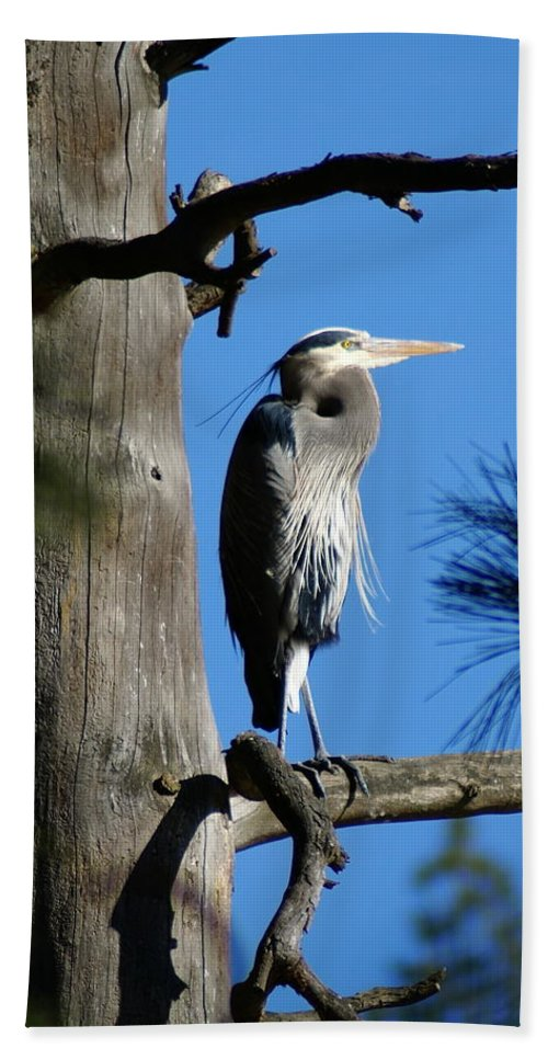 Birds Bath Sheet featuring the photograph Majestic Great Blue Heron 2 by Ben Upham III