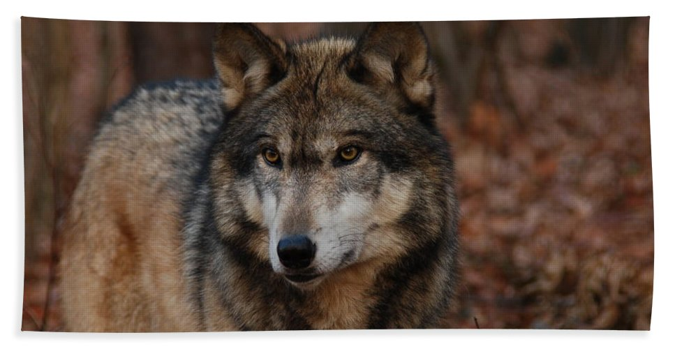 Wolf Hand Towel featuring the photograph Majesty by Lori Tambakis