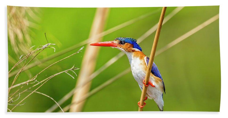 Malachite Kingfisher Bath Sheet featuring the photograph Malachite Kingfisher On The Hunt by Kay Brewer