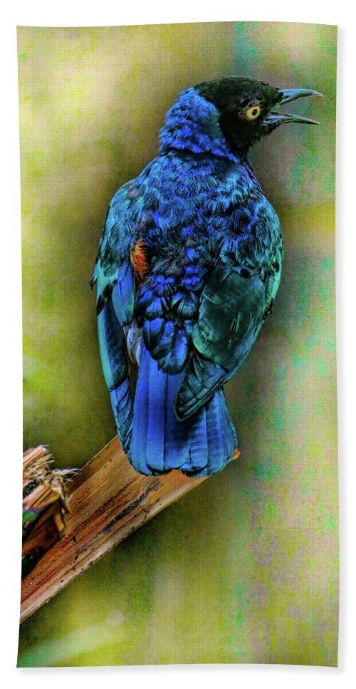 Bird Bath Sheet featuring the photograph Male Fairy Bluebird by Allen Beatty