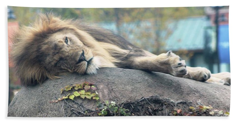Hand Towel featuring the photograph Male Lion by Rocky Washington