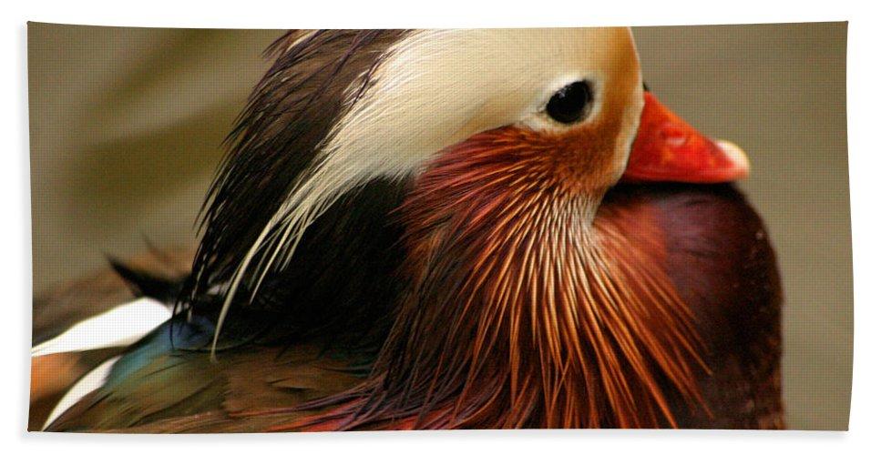 Mandarin Duck Hand Towel featuring the photograph Male Mandarin Duck China by Ralph A Ledergerber-Photography