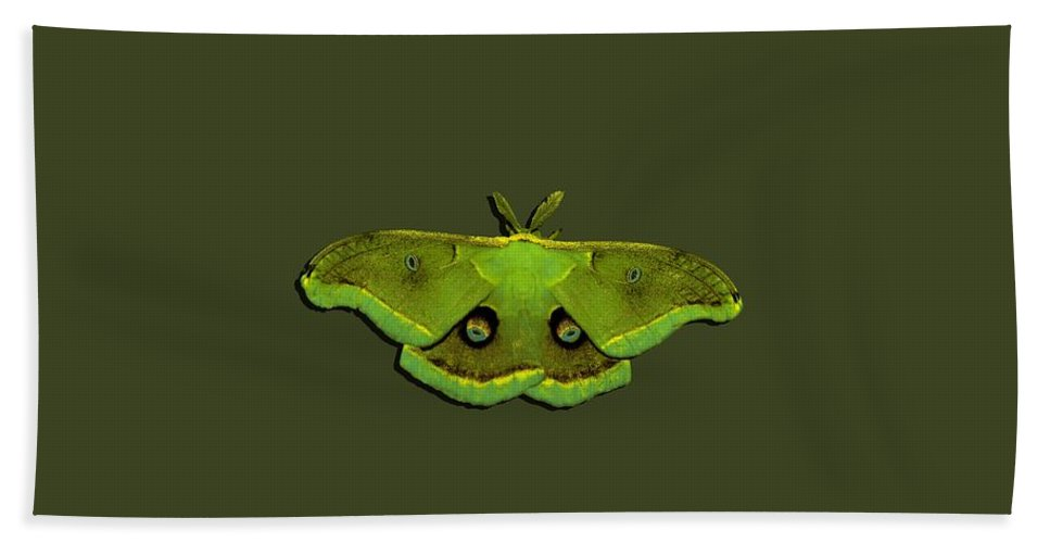 Moth Hand Towel featuring the photograph Male Moth Green And Yellow .png by Al Powell Photography USA
