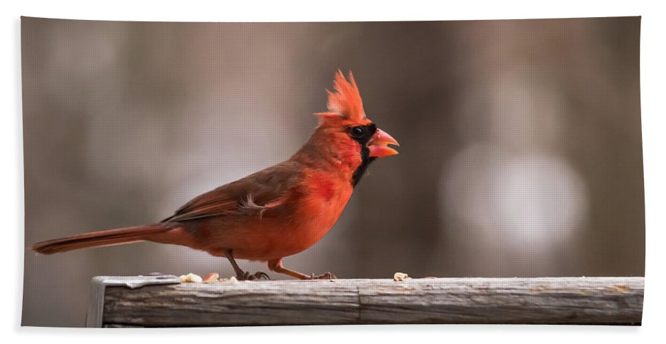Terry D Photography Hand Towel featuring the photograph Male Northern Cardinal Winter New Jersey by Terry DeLuco