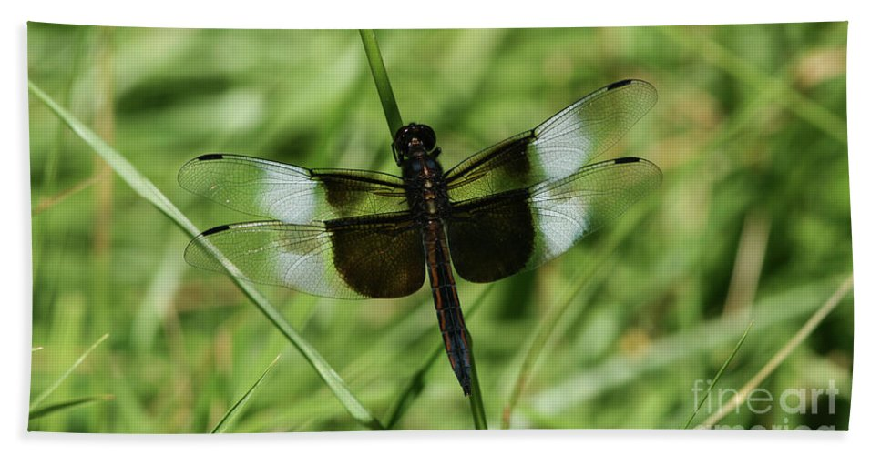 Dragonfly Bath Sheet featuring the photograph Male Widow Skimmer Dragonfly #4 by Judy Whitton