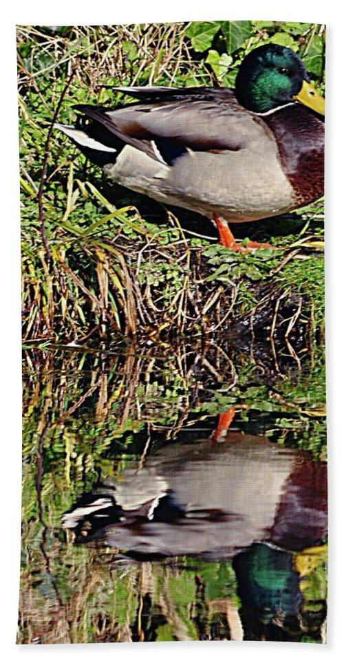 Mallard Bath Sheet featuring the photograph Mallard And Reflection by John Hughes