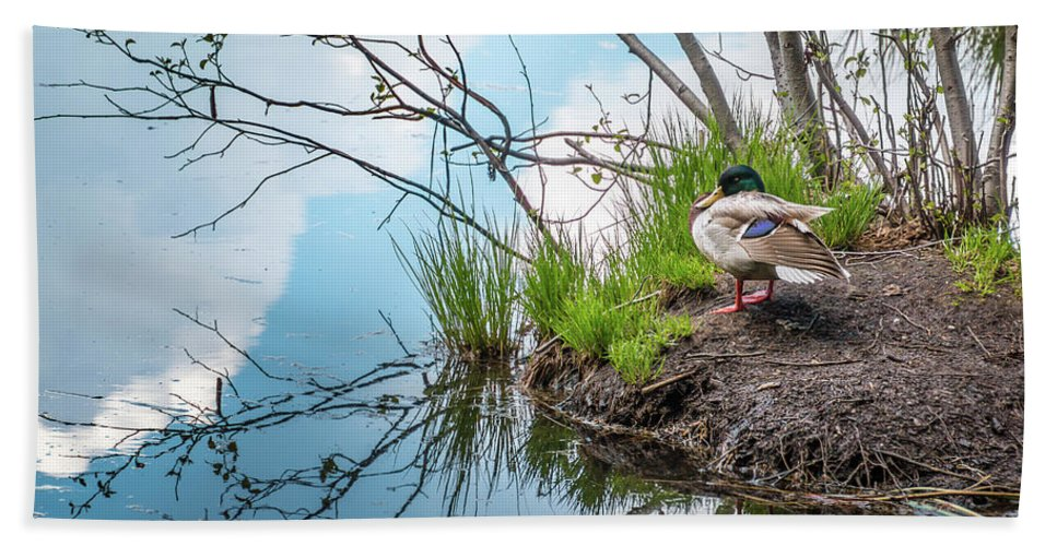 Trailsxposed Bath Sheet featuring the photograph Mallard At Silver Lake by Gina Herbert