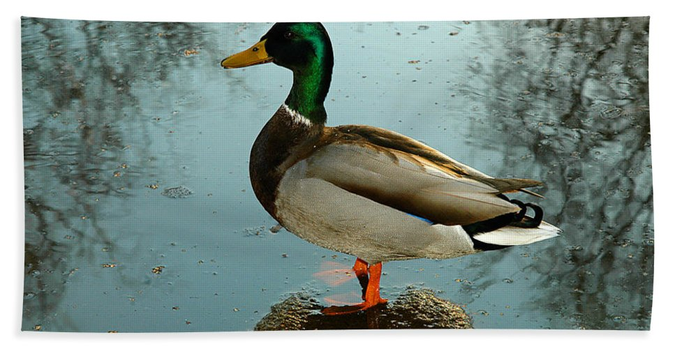 Clay Bath Towel featuring the photograph Mallard by Clayton Bruster