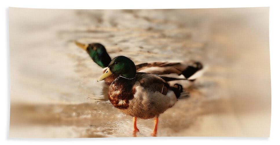 Mallard Ducks Hand Towel featuring the photograph Mallard Ducks by Angie Tirado