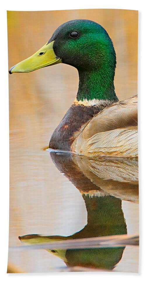 Mallard Bath Sheet featuring the photograph Mallard Mirror by William Jobes