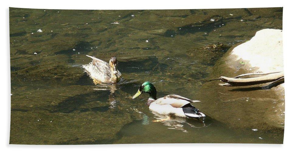 Bird Hand Towel featuring the photograph Mallards 1 by Rich Bodane
