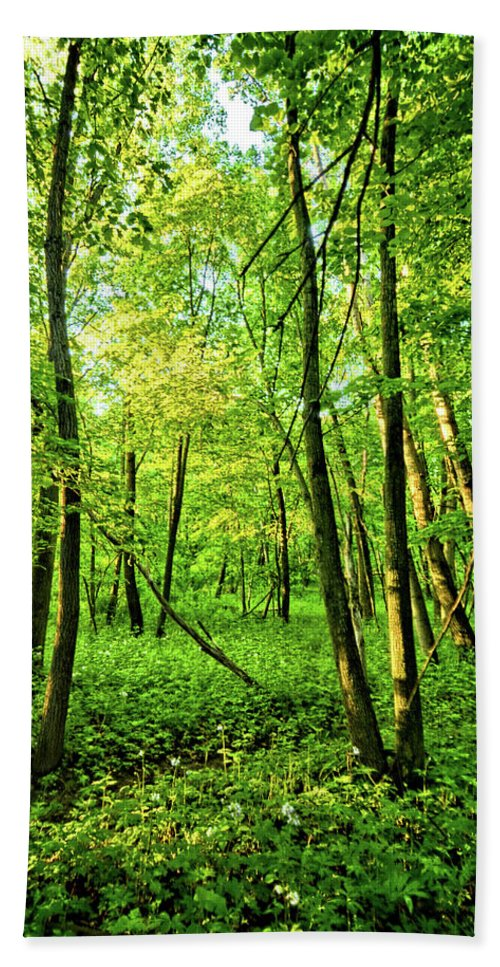 Forest Bath Sheet featuring the photograph Mallory Woods by Bonfire Photography