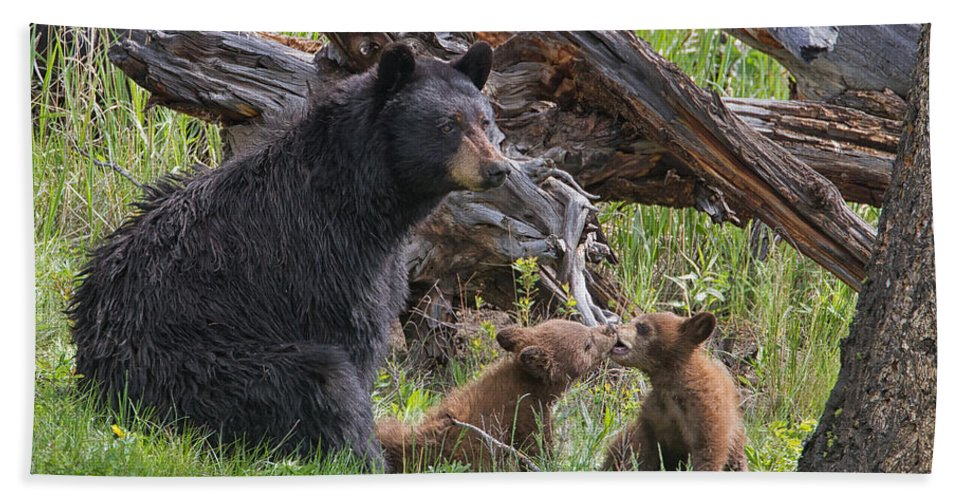 Yellowstone Wildlife Prints Hand Towel featuring the photograph Mama Black Bear With Cinnamon Cubs by Martin Belan