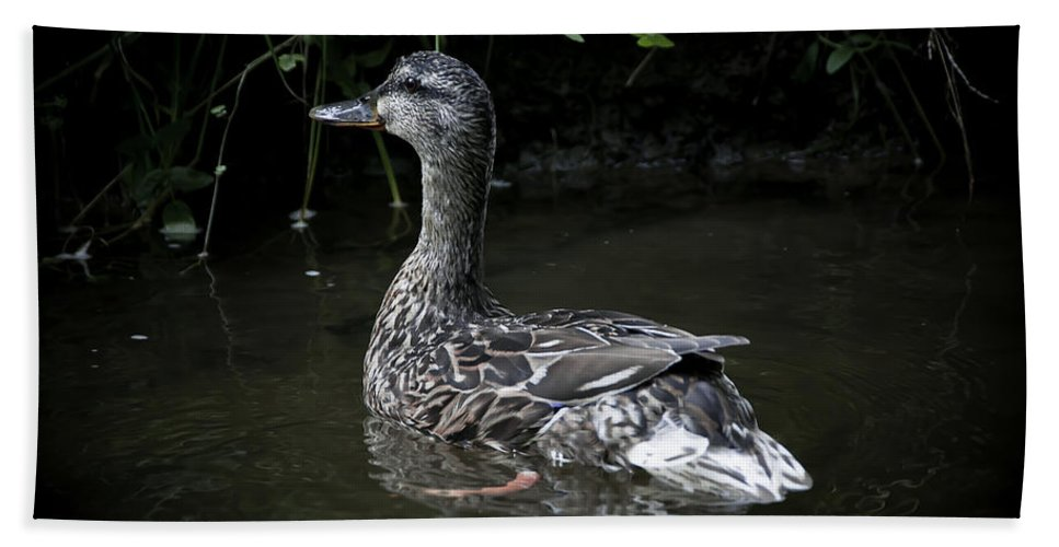 Duck Bath Sheet featuring the photograph Mama Duck by Svetlana Sewell