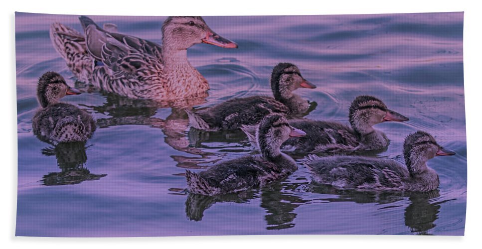Bird Hand Towel featuring the photograph Mama's Love by Leslie Reagan - Joy To The Wild Photos
