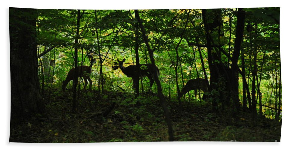 Deer Bath Sheet featuring the photograph Mamma And Twins by Michelle Hastings