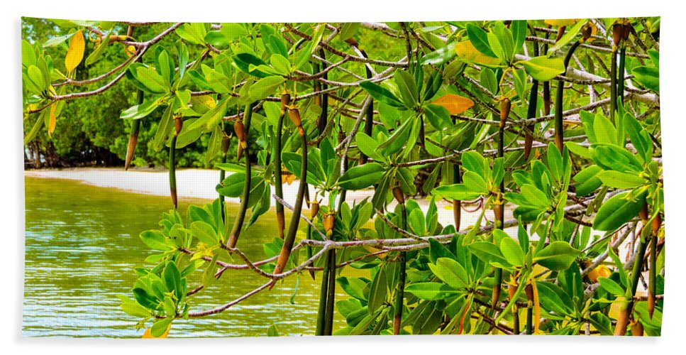 Mangrove Trees Hand Towel featuring the photograph Mangrove Pods by Marilee Noland