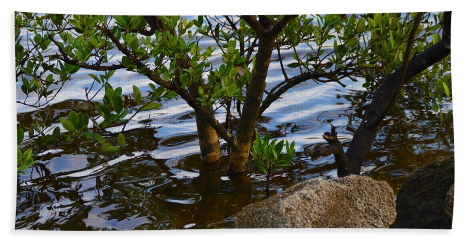 Mangroves Bath Sheet featuring the photograph Mangroves And Coquina by Julianne Felton