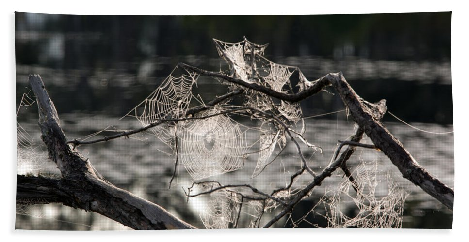Spider Web Hand Towel featuring the photograph Many Webs by Linda Kerkau