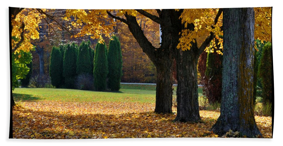 Trees Bath Sheet featuring the photograph Maple And Arborvitae by Tim Nyberg